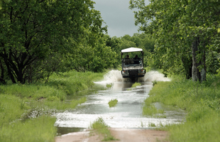 Kwihala Game Drive Rains