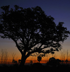 Ruaha Sunset