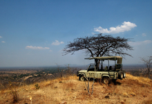 Ruaha Game Drive October