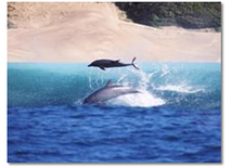 Pdo Dolphins Pic44