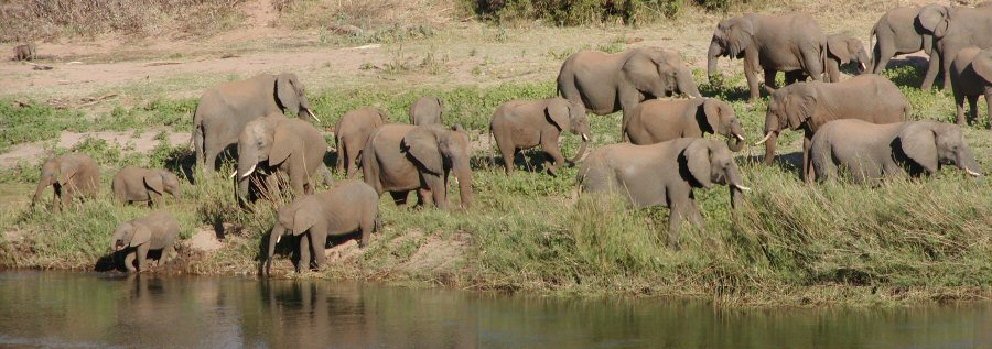 View Elephant Herds with frontiertours
